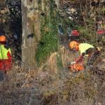 Holzfällarbeiten in Gaiberg: Einige Wege bald länger gesperrt