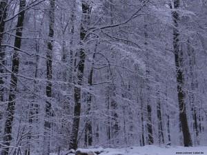 055 - Schnee