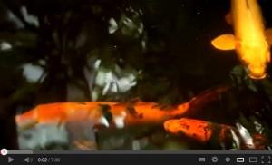 319 - ZAP-Video