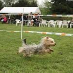 Erfolgreiches erstes Hunderennen bei den Hundefreunden in Gauangelloch