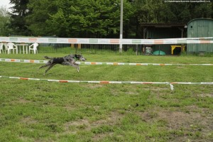 410 - Hundesport GA 5