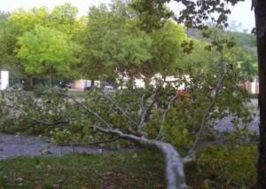 568 - Umgestürzter Baum