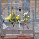 Zum Urlaubsbeginn einfach Vogelkäfig ausgesetzt!