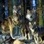 Ausflugsziel Wildpark Bad Mergentheim: Tiere sehen und erleben