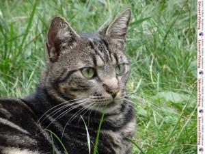 834 - Katze