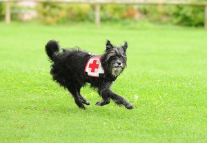 930 - Rettungshunde 1