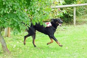 930 - Rettungshunde 2