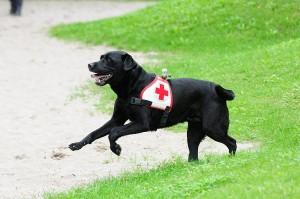 930 - Rettungshunde 5