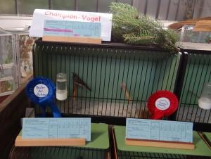 1078 - Vogelzüchter SA - 4