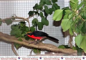 1078 - Vogelzüchter SA - 6