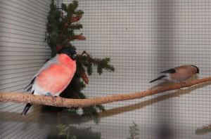 1078 - Vogelzüchter SA - 8
