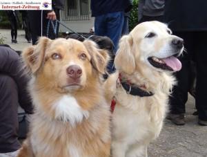 972 - Hundetag SA 3