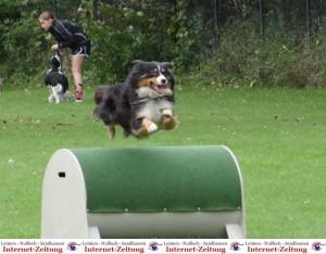 972 - Hundetag SA 7