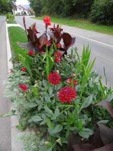 4021 - Straßenblumen Sandhausen 3