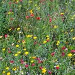 4029 - Wiesenblumen 1