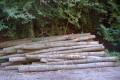 Sandhäuser Forst: Verkauf von 865 Festmeter Holz für 40.000 € vorgesehen