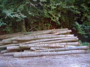 Polterholz
