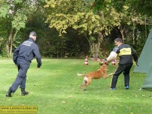 4313 - Polizeihunde - 4