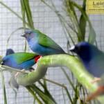 Ausstellung der Vogelfreunde Sandhausen – Neuer Besucherrekord bei Kaiserwetter