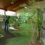 Nusslocher Kleintierzüchter erweiterten Ausstellung um Fasanen, Enten und Ziegen