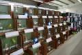 Vogelfreunde Leimen präsentierten über 250 Vögel auf ihrer Jahresausstellung