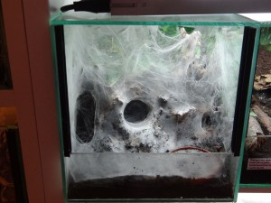 4447 - Das Spinnennetz ist eine Konstruktion zum Beutefang
