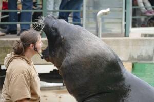 4518 - Robben im Zoo 2