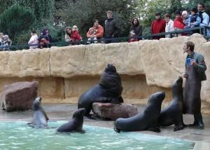 4518 - Robben im Zoo