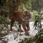 Abwechslungsreiche Herbstferien garantiert - Schnupper-Workshops für Kinder im Zoo