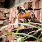 Bei der Inventur im Heidelberger Zoo wird durchgezählt: 178 Tierarten mit 1347 Tieren