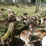 Ausflugstip: Waldspielplatz mit Wildgehege und Naturfreundehaus Leimen