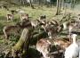 Ferien-Ausflugstip: Waldspielplatz mit Wildgehege Leimen