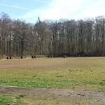 Nußloch will Waldkindergarten am Waldsportplatz gründen