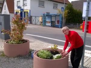 5063 - Blumenkübel-Bepflanzung