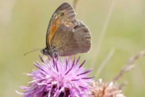 2169 - Schmetterling