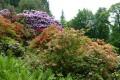 Ausflugstip Heidelberger Rhododendronanlage: Jetzt blüht sie richtig prächtig