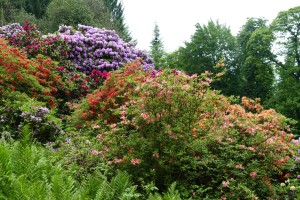 2194 - Rhododendron-Anlage HD - 10