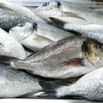 2206 - La Vite - Frischer Fisch - 1