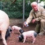 Ferien-Ausflugsziel Heidelberger Zoo: Sonnenmilch für Borstentiere