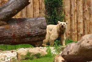 2234 - Bären 2