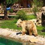 Benny der Bär, der sich nicht traute
