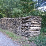 Brennholz stark nachgefragt – Preise bleiben stabil  – Motorsägenschein erforderlich