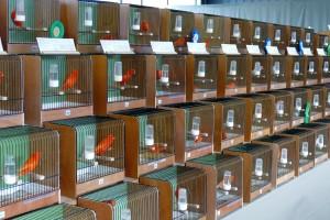 5820 - Vogelzüchter Leimen - 4