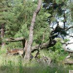 Landes-Naturschutzpreis ausgeschrieben - Bis 1. August bewerben