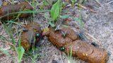 Unschöne Sauerei in Gauangelloch: </br>Kinderspielplätze sind keine Hundetoilette