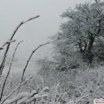 Winterwetter mit geschlossener Schneedecke: Polizei sperrte Heidelberger Königstuhl