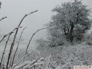 6724 - Winterimpressionen 6