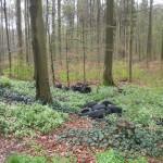 Altreifen auf Waldparkplatz vor Gauangelloch abgeladen – Zeugen gesucht