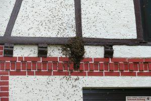 7089 - Bienenschwarm 1