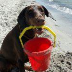 Wohin mit dem Haustier in den Ferien? Tipps vom Tom Tatze Tierheim